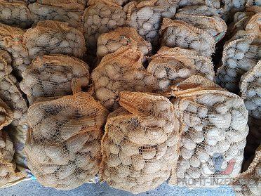 Adela brambory konzumní, typ B, Havířov