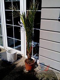Palmy a agave superlevně