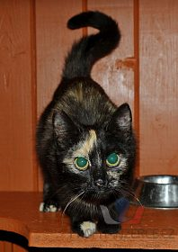 Darujeme nalezenou kočičku