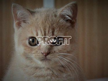 Nádherná britská koťátka s PP !!!