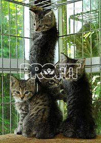 Našla se koťata ve Starých Hodějovicích