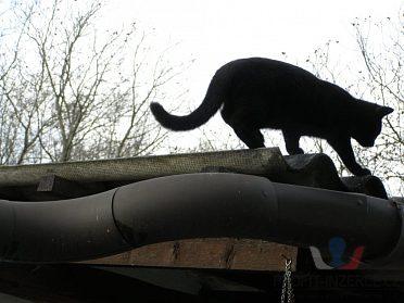 Daruji nalezená kotátka a kočičku