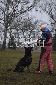 Německý ovčák mohutná štěńata