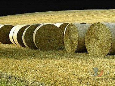 Sláma pšeničná a ječmenná