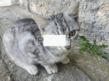 Prodam koťátka