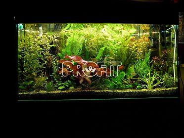 Akvárium, terárium 200 l