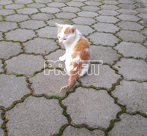 Daruji koťátko