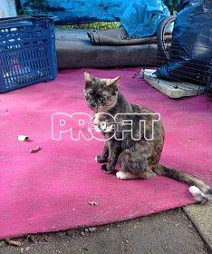Kočka z nevhodných podmínek na adopční smlouvu