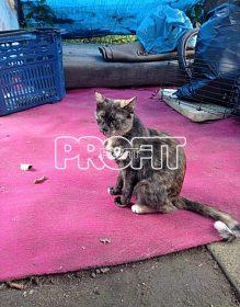 Kočička z nevhodných podmínek na adopční smlouvu