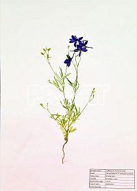 Prodám kvalitní herbář  Prodám kvalitní herbář velikosti A3