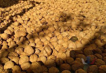 Vlašské ořechy(sušené, neloupané, 2018)