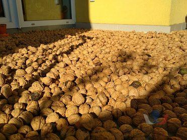 Vlašské ořechy(sušené,neloupané,letošní)