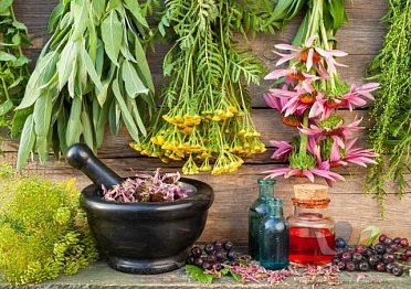 Pronájem domku se zahradou s výhodami