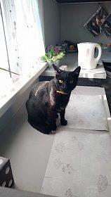daruji černou tříletou kočičku