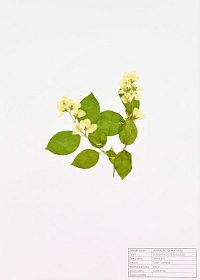 Prodám kvalitní herbář