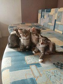 Daruji koťata