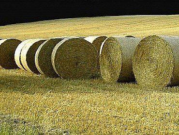 Sláma pšeničná, ječmenná a ovesná