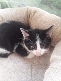 Daruji krásné čistotné koťátko kocourek