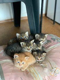 darujeme koťata do dobrých rukou