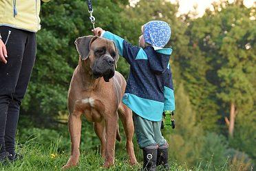 Cane Corso chovný pes s PP