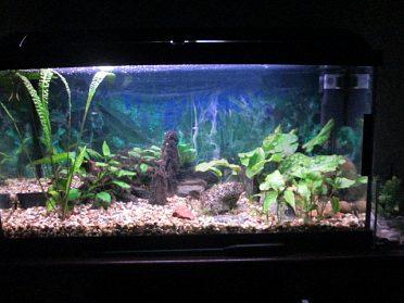 komplet akvarium