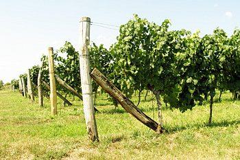 PRONAJMU vinohrad 300hlav cca.650m2+přilehlý pozemek 352m2