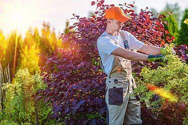 Práce na zahradách